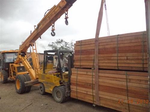 Tali Wood 2