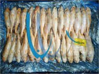 Frozen Croaker Fish