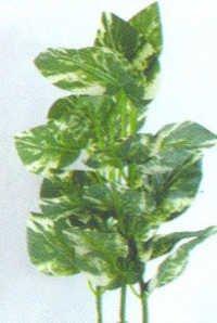 Barwell Plant E 1006