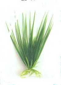 Barwell Plant E 2040,12''