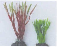 MPS Artificial Silk Plant 86038/8''