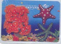 MPS  Coral Plant  CP 3102 B