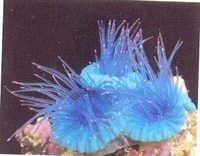 MPS coral Plant SH-014B-B