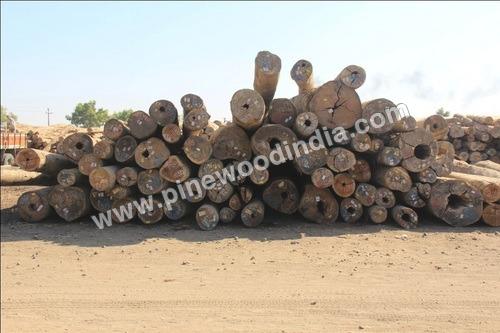 Kapur Logs