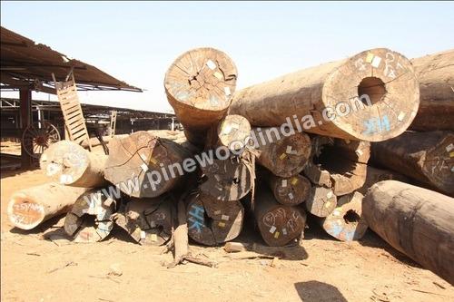 Kapur Wood Logs