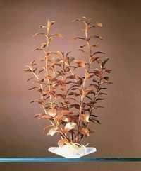 PENN PLAX PLANT SUP LUDWIGIA RED
