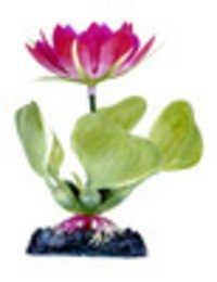 PENN PLAX PLANT WHITE WATER HYACINTH 3