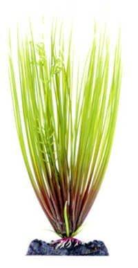 PENN PLAX HAIR GRASS 11