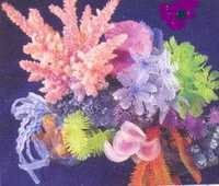 MPS Coral Plant SH 254 C