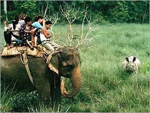 Nature Safari Tour