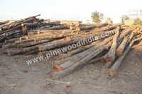 Costarica Teak Logs