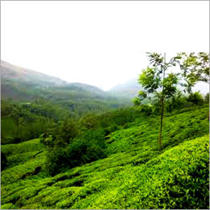Munnar Local Tour Package