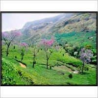 Munnar Holiday Package