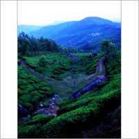 Munnar Holiday Tour