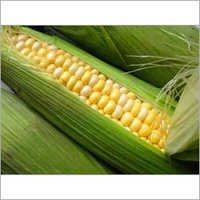 Natural Sweet Corn