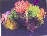 MPS Coral Plant SH 255 A