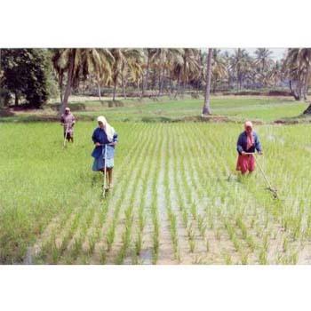 Agriculture Cono Weeder