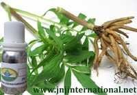 VELERIAN ROOT OIL