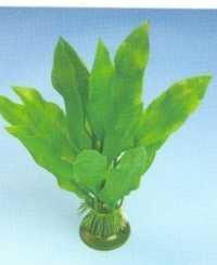 NW Plastic Plant AP 019