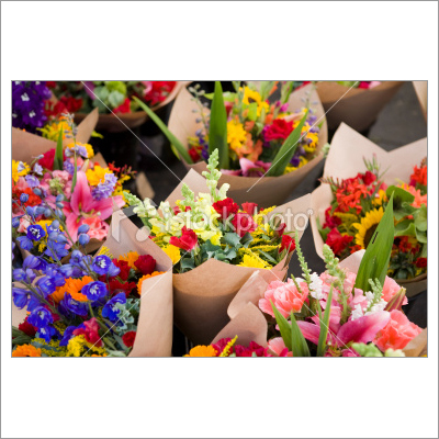 Plant, Flowers & Dried Flowers