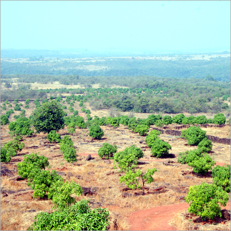 Fruits Tree Plantation