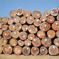 Teak Veneered Logs