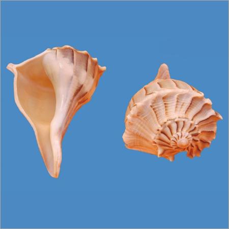 Right Hand Shell