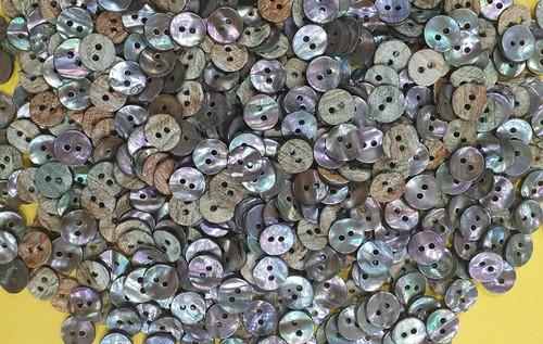 Abelone Shell Buttons