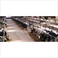 Dairy Consultancy