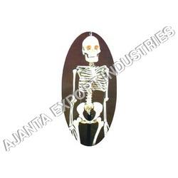 Human Skeleton Model