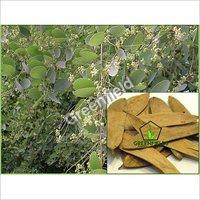 Anjan Tree Seeds ( Hardwickia Binata )