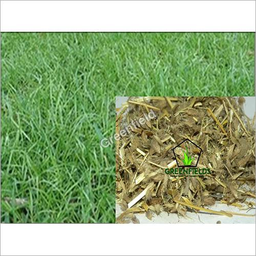 Grass  / Fodder / Forage Seeds