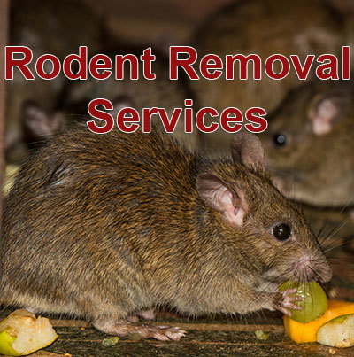 Rat & Rodent Control Services