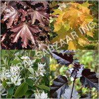 Ornamental Flowering Shrub & Half Trees