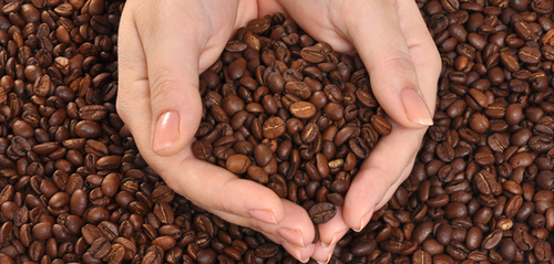 Cocoa Product Testing Services