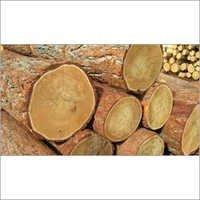 Sawn Timber Logs