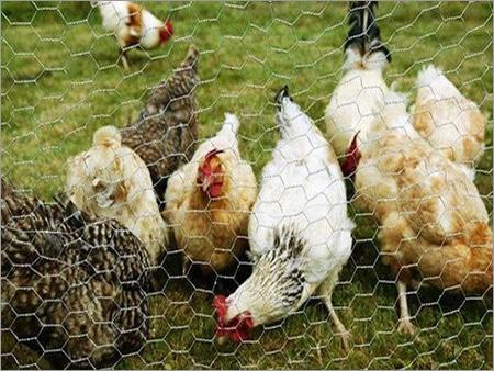 Hexagonal Mesh( Chicken Mesh)