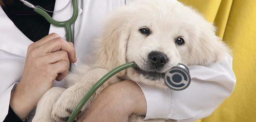 Veterinary Medicines