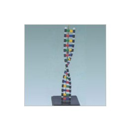 DNA Structure Simulation Kit Model