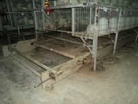 Manure Cleaning Conveyor