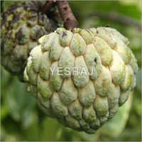 Sell Offer For Custard Apple