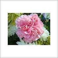 Coronations Flower