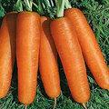 Organic Carrot Seeds
