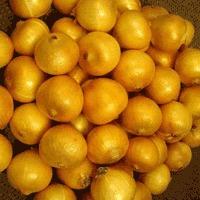 Organic Onion Seeds