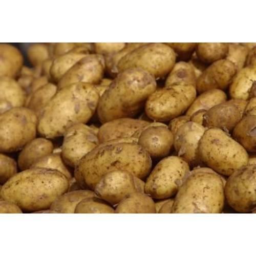 Special Table Potato