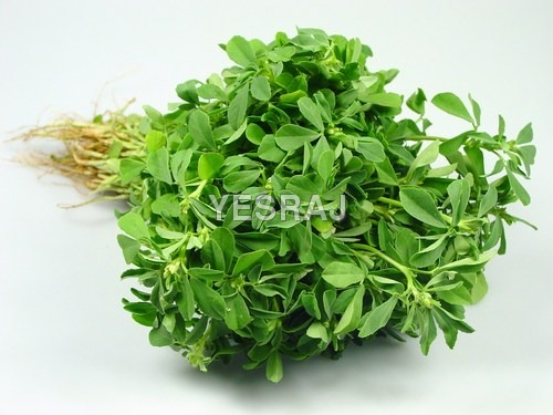 Fennu Greek Small Leaf (Methi Leaf)
