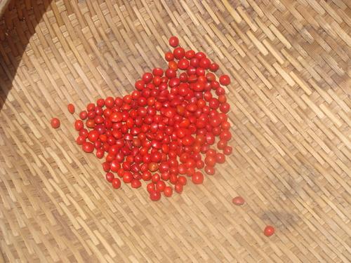 Adnenthera Pavoniana Seeds