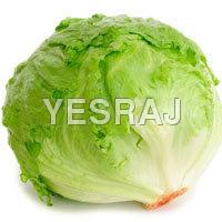 iceberg-lettuc