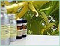 Java Cananga Oil