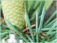 Atlas Cedarwood Oil
